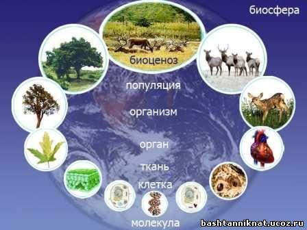7 уровней организации живой материи: